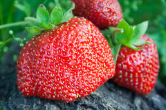 Berry Strawberry. Strawberry berry close up against a grass Royalty Free Stock Images