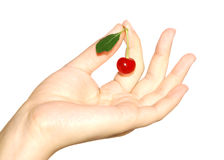 Berry of a sweet cherry in the handle Royalty Free Stock Photos
