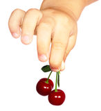 Berry of a sweet cherry in the handle Royalty Free Stock Photo