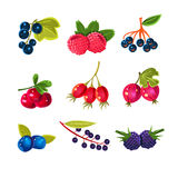 Berry Vector Set variopinto succoso Immagini Stock