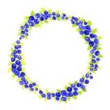 Berry Wreath bär nya bär Vattenfärgkrans Arkivfoto