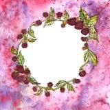 Berry Wreath bagas Bagas frescas Grinalda da aquarela Imagem de Stock