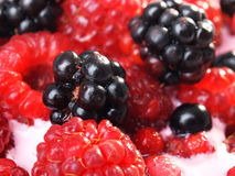 Berry yogurt Stock Photography