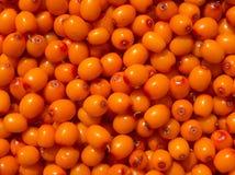 Berryes för havsbuckthorn Bakgrund Royaltyfri Foto