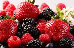 Berrys Royaltyfria Foton