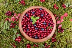 Berrys del otoño Fotografía de archivo