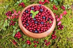 Berrys del otoño en musgo Foto de archivo libre de regalías