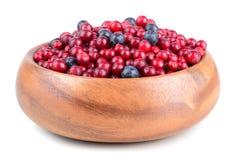Berrys do outono Fotografia de Stock