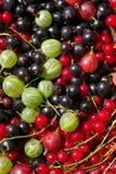 Berrys freschi Immagini Stock
