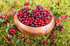 Berrys in moss Stock Photo
