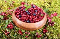 Berrys no musgo Foto de Stock