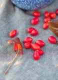 Berrys y hojas rojos Foto de archivo