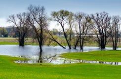Überschwemmtes Feld Stockfotos