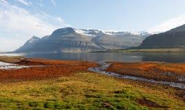 Berufjordur海湾, Djupivogur冰岛 免版税库存照片