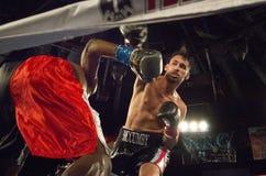 Berufsboxer im Matchup Stockfotografie