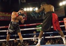 Berufsboxer im Matchup Stockfoto