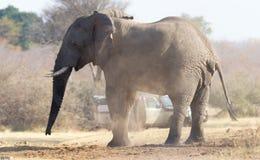 Berufsfotograf, der herein Schüsse eines afrikanischen Elefanten nimmt stockbilder