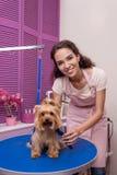 Berufsgroomer, der Kamm beim Pflegen des Hundes im Haustiersalon hält Stockfotografie