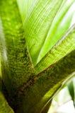 Beruhigende grüne Reihe Stockbild