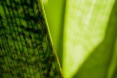 Beruhigende grüne Reihe Lizenzfreie Stockfotos