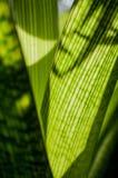 Beruhigende grüne Reihe Stockfoto