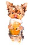 Berusad hund med öl royaltyfri bild