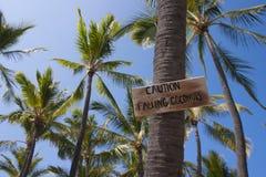 Überwachen Sie für fallende Kokosnüsse Stockfotografie