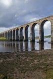 Berwick em cima da ponte real da beira da mistura de lã Imagem de Stock
