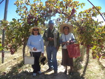 Besök av turister till mitten Vitivinicola Tarija Royaltyfri Bild