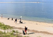 Besökare för hundkapplöpning för svan för bred flodmynning för New York Long Island tidvattens- Royaltyfri Bild