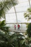 Besökare i de Kew för gömma i handflatanhus trädgårdarna Arkivbild