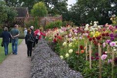 Besökare som beundrar daliahgränsen Royaltyfria Foton