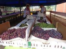Besökare till godkännandet av druvor, singanisviner Arkivbilder