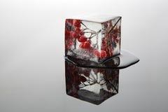 Bes in het ijs (viburnum) Royalty-vrije Stock Afbeelding