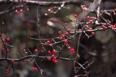 Bes op brachesboom in de herfst royalty-vrije stock foto's