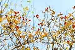 Bes van meer brier en blauwe hemel in de herfst royalty-vrije stock fotografie