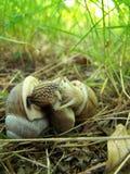 Besar caracoles Fotografía de archivo libre de regalías