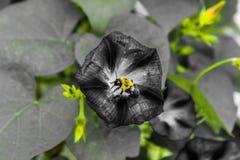 Beschäftigt wie eine Biene Stockbild