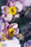 Beschäftigte Biene Lizenzfreie Stockfotografie