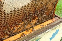Beschäftigte Bienen, Abschluss herauf Ansicht der Arbeitsbienen auf Bienenwabe Lizenzfreies Stockfoto