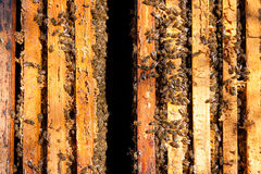 Beschäftigte Bienen, Ansicht der Arbeitsbienen auf Bienenwabe Lizenzfreie Stockbilder