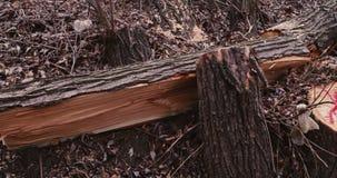 Beschadigd lof van boom stock video