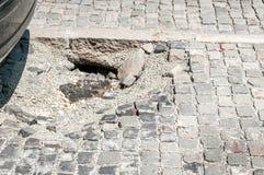 Beschadigd parkeerterrein van kei met gat, gevaar voor auto's royalty-vrije stock foto's