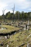 Beschadigde Bossen - Argentinië - Ushuaia - Tierra del Fuego stock afbeelding
