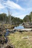 Beschadigde Bossen - Argentinië - Ushuaia - Tierra del Fuego stock foto's