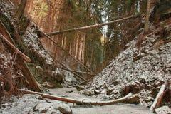 Beschadigde gevallen bomen op kreek in vallei in de winter na sterk Stock Foto