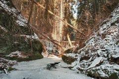 Beschadigde gevallen bomen op kreek in vallei im de winter na sterk s Stock Fotografie