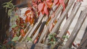 Beschadigde houten omheining op de muur stock videobeelden
