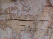 Beschadigde oude triplextextuur Stock Foto