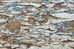 Beschaffenheit, alte blaue Farbe auf den Brettern Stockfotografie